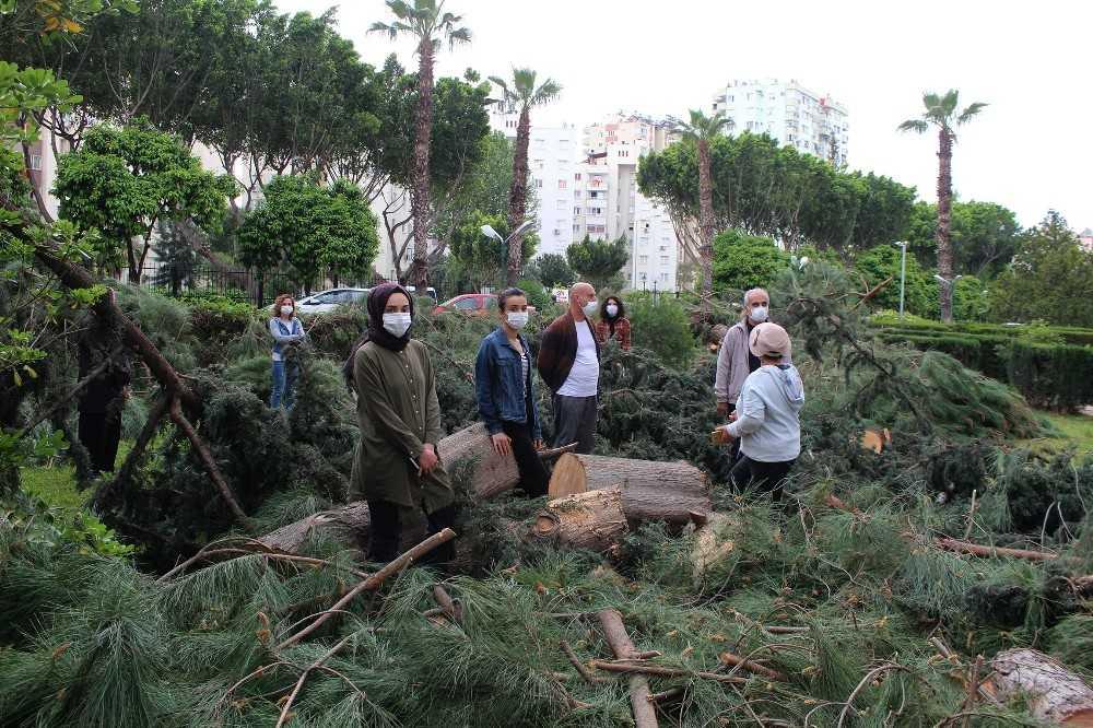 Antalya'da sitede ağaç kesim gerginliği