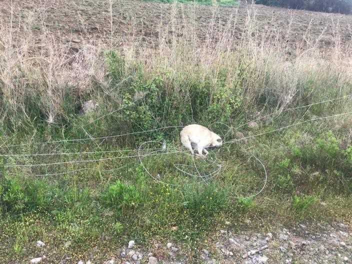 Elektrik akımına kapılan 8 koyun telef oldu