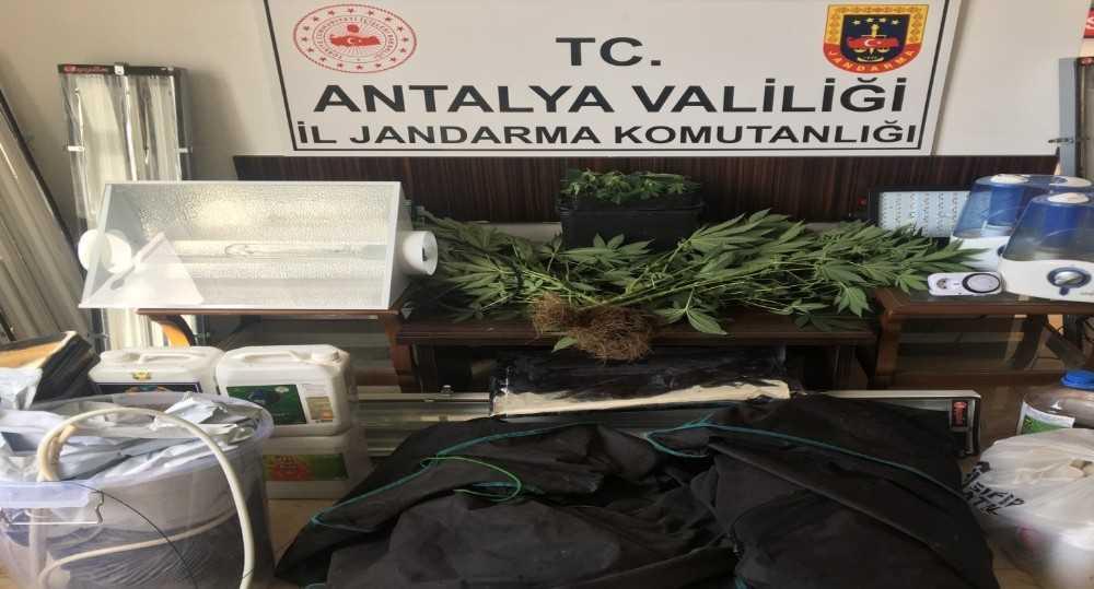 Alanya'da özel düzenekle uyuşturucu yetiştirilen eve baskın