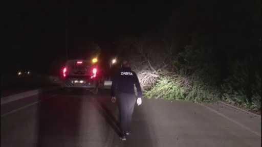 Antalya'da fırtına ağaçları kökünde söktü, elektrik direklerini yıktı