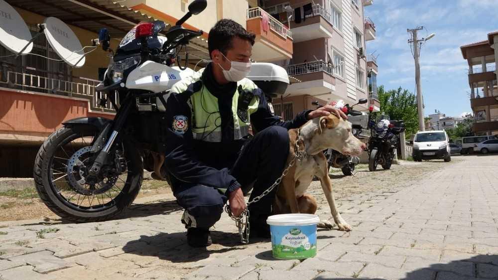 Antalya'da şahin polis ekipleri, sokakta yaşayan sahipsiz hayvanlar için seferber oldu