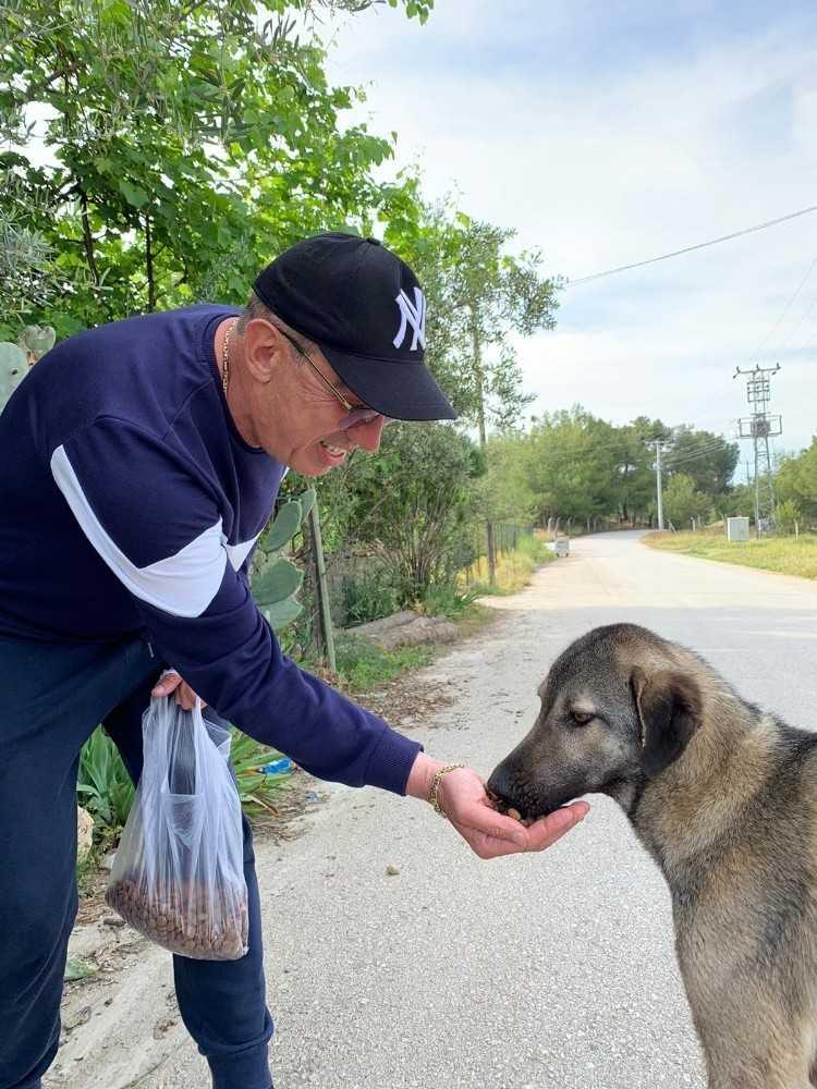 Antalyalı iş adamı sokak hayvanları için mama dağıttı