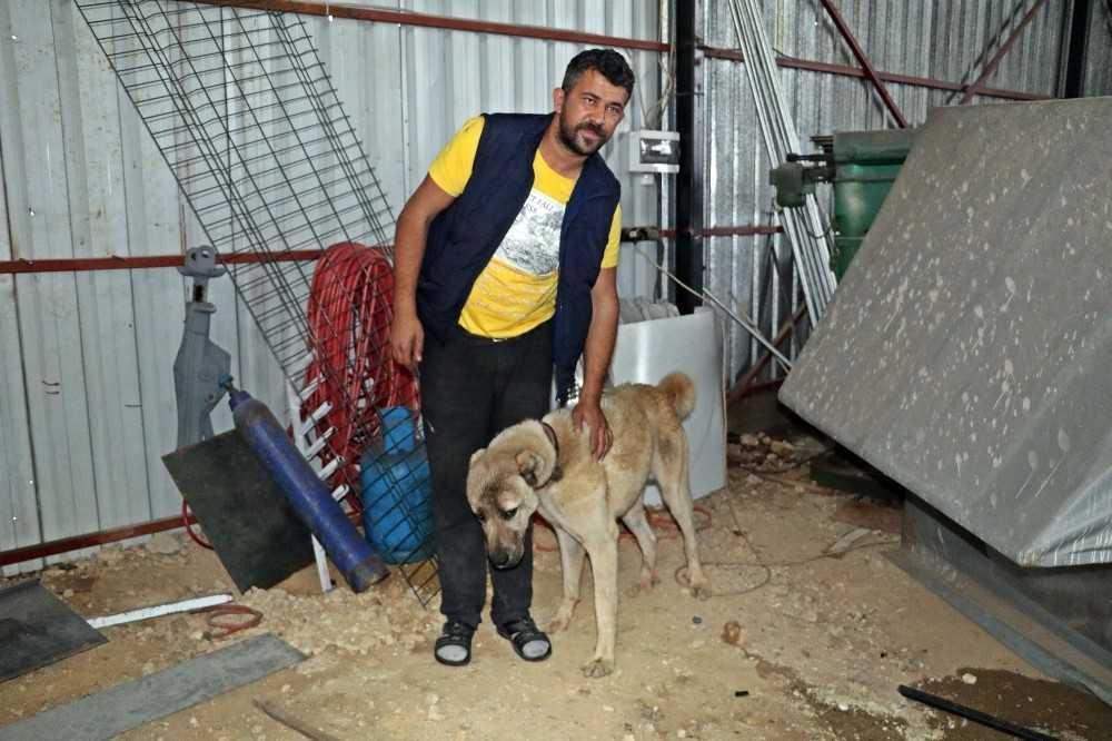 İnsafa gelen hırsızlar çaldıkları köpek ve güvercinleri 10 gün sonra sahibine geri gönderdi