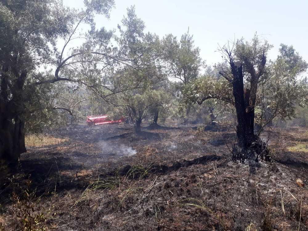 90 zeytin ağacı yangında zarar gördü