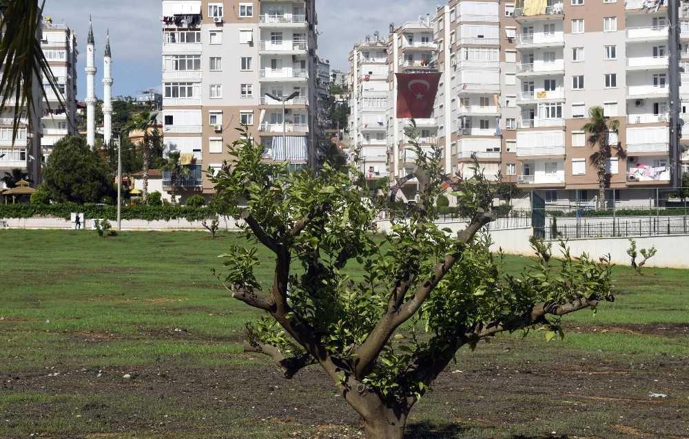 Çamlıbel'e narenciye bahçesi