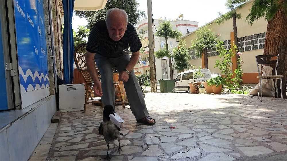 (Özel) Balıkçının kediden kurtardığı kargayla 8 yıllık dostluğu görenleri şaşırtıyor