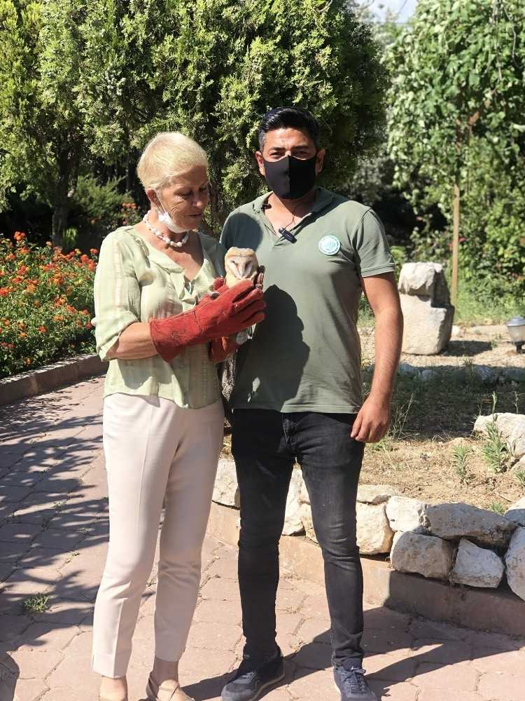 Yavru baykuş Athana, Yaban Hayatı Müdürlüğüne teslim edildi