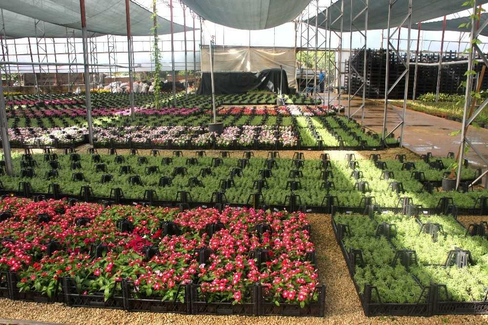 Alanya Belediyesi, 21 mezarlıkta 58 bin çiçek dağıtacak