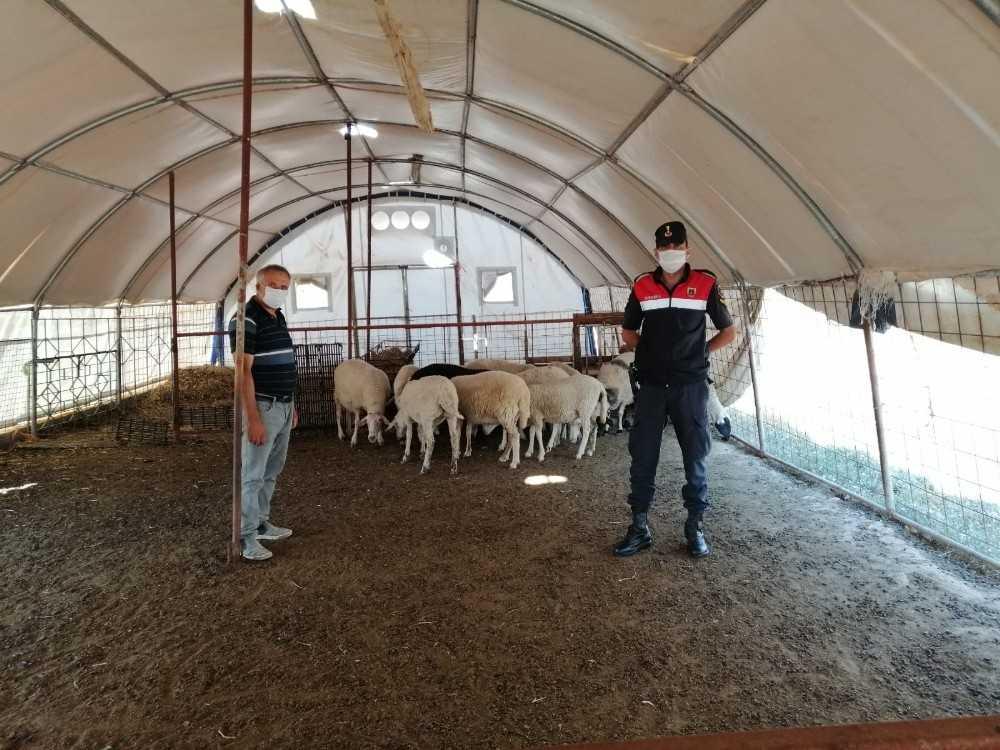 Antalya'dan çaldıkları hayvanları, Afyonkarahisar'da satmaya çalıştılar