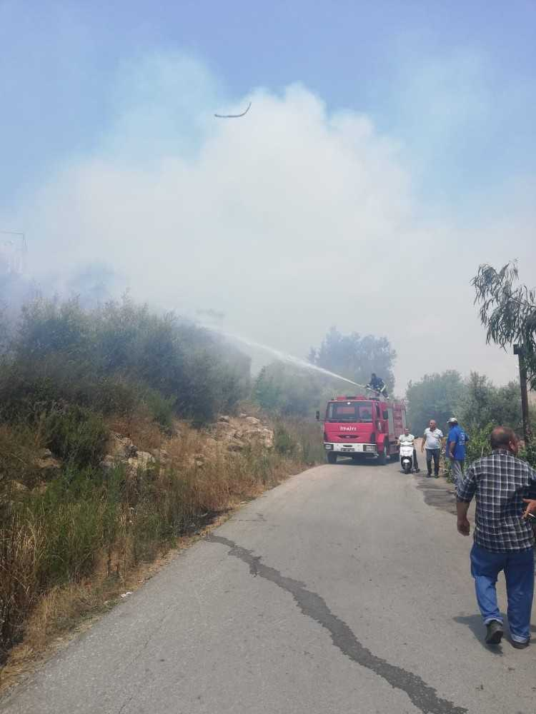 Arazide çıkan yangın zeytin ağaçlarına zarar verdi