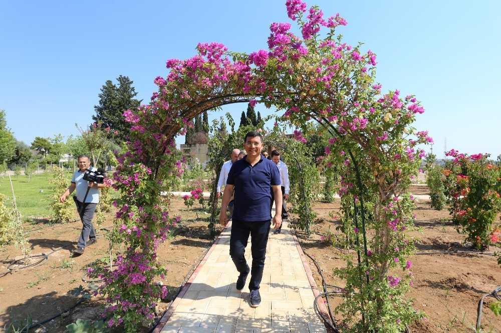 Dokuma Botanik Park'ta çalışmalar devam ediyor