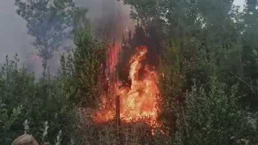 Manavgat'ın Yaylaalan mahallesinde başlayan orman yangını, günün ağarmasıyla havadan yapılan müdahalelerle kontrol altına alınmaya başlandı.