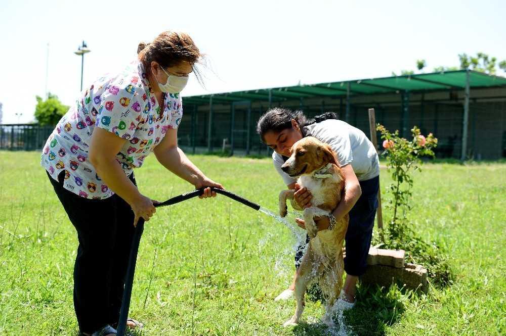 Muratpaşa Belediyesinden sokak hayvanlarına sulu serinlik