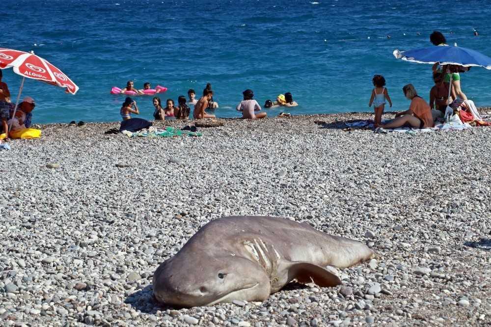 Olta ile avlanan yaklaşık 3 metrelik ölü köpek balığı sahile vurdu