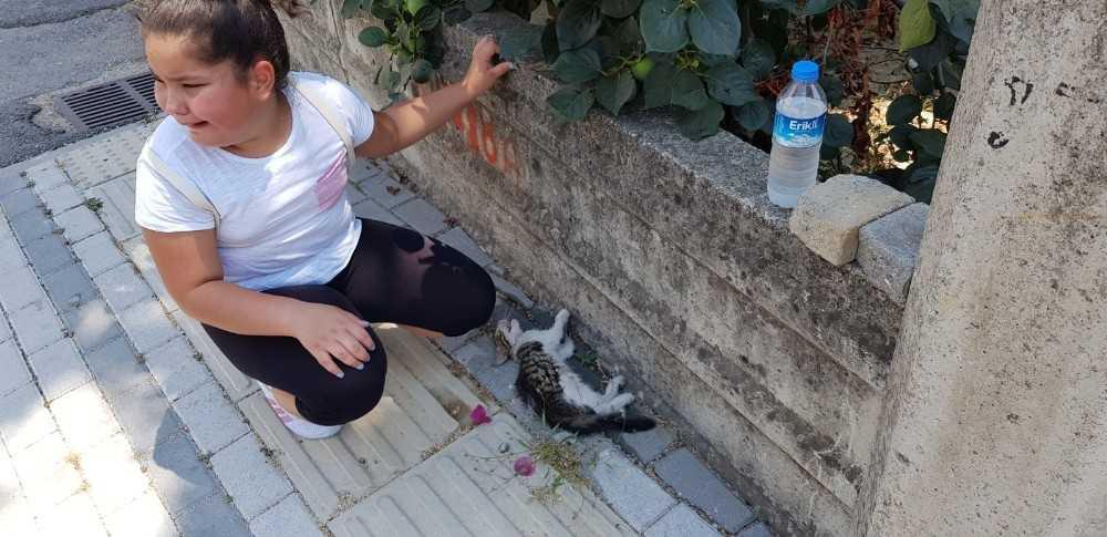 Yol kenarında can çekişen kediyi gören 9 yaşındaki Laden, gözyaşlarına boğuldu