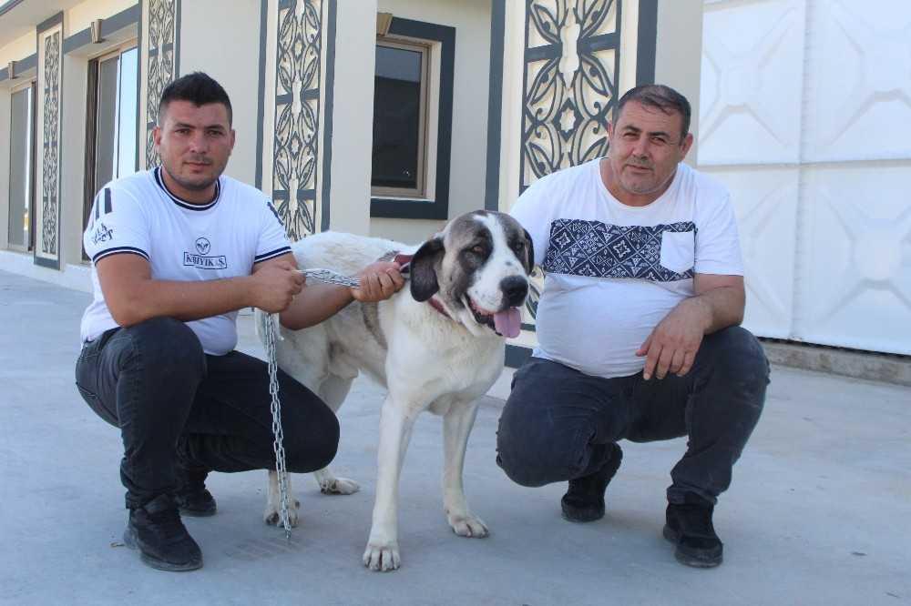 Yolda bulup tedavi ettirdiği sokak köpeği sebebiyle haciz geldi, köpeğin ismini 'Haciz' koydu