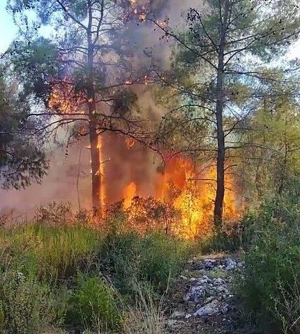 Zamanında müdahale ormanı kurtardı