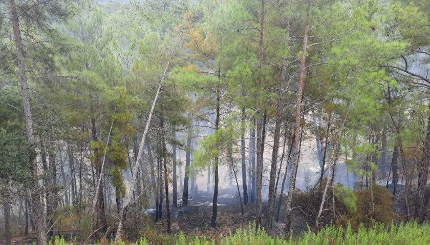 Manavgat'ta orman yangını büyümeden söndürüldü