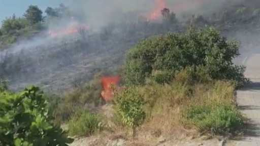 Manavgat'taki yangında zeytin ağaçları zarar gördü