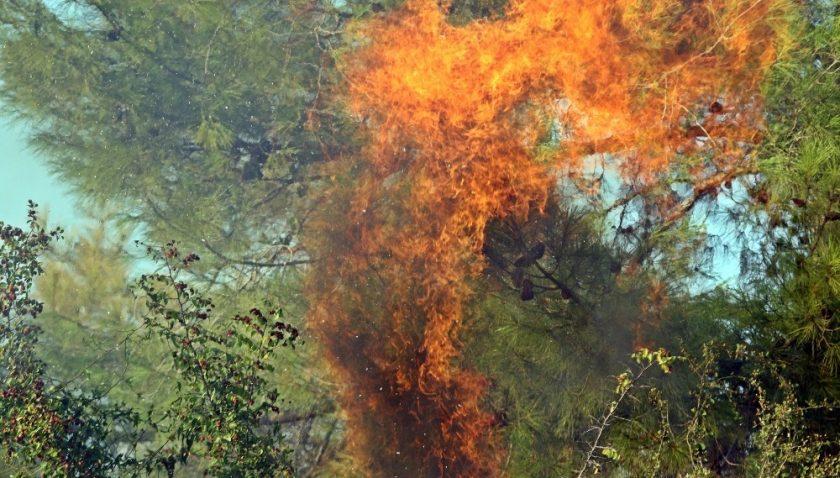 Serik'teki orman yangınına 165 işçi müdahale ediyor