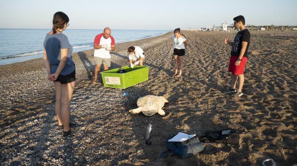 Deniz kaplumbağaları için rehabilitasyon merkezi kurulacak