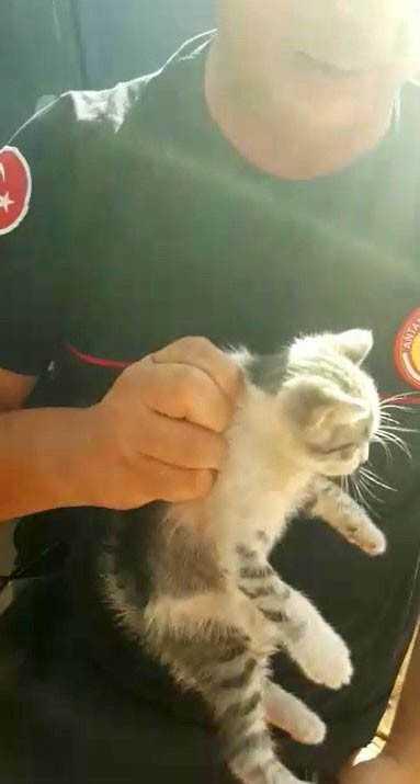 Sanatçı Sümer Ezgü'nün tatiline yaramaz kedi rötarı