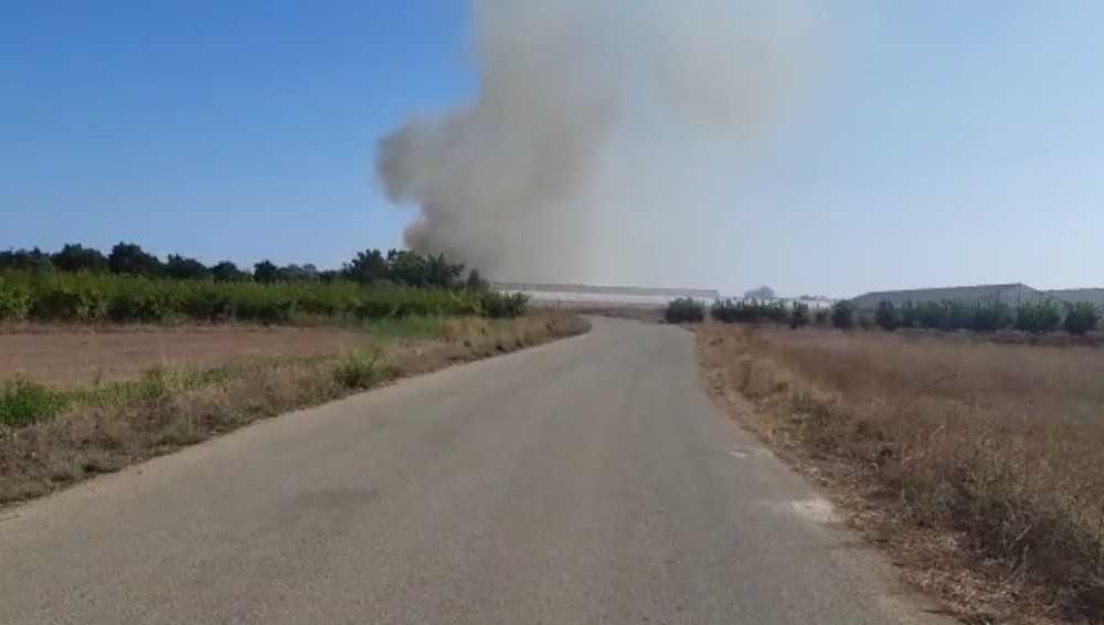 Antalya'da anız yangını sera ve zeytin ağaçlarına zarar verdi