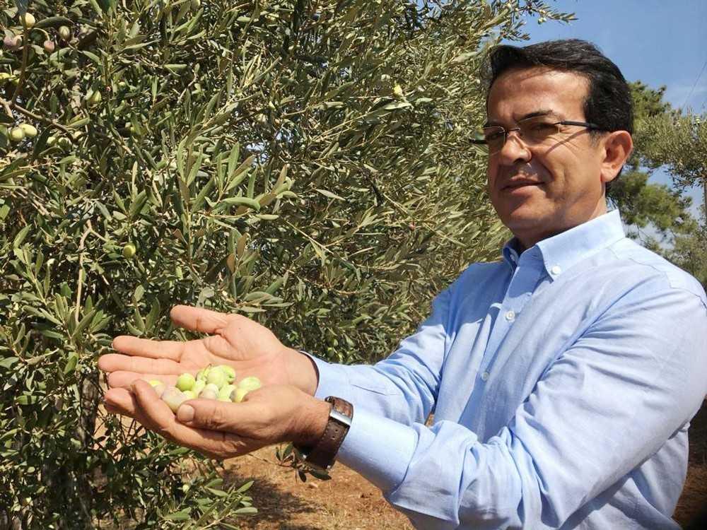 ATB, zeytin tiplerinin biyokimyasal ve duyusal farklılıklarını tespit edecek