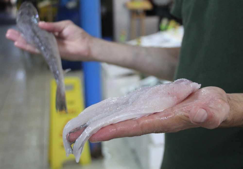 Balon balığı etinin fileto gibi satıldığı iddiası