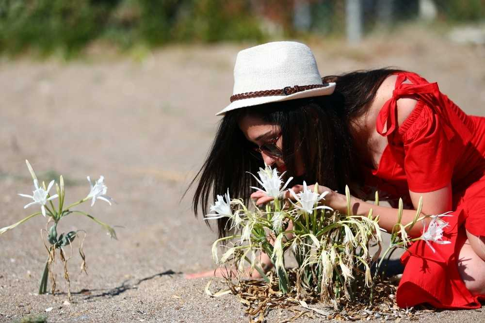 Kum zambaklarına tel örgülü koruma