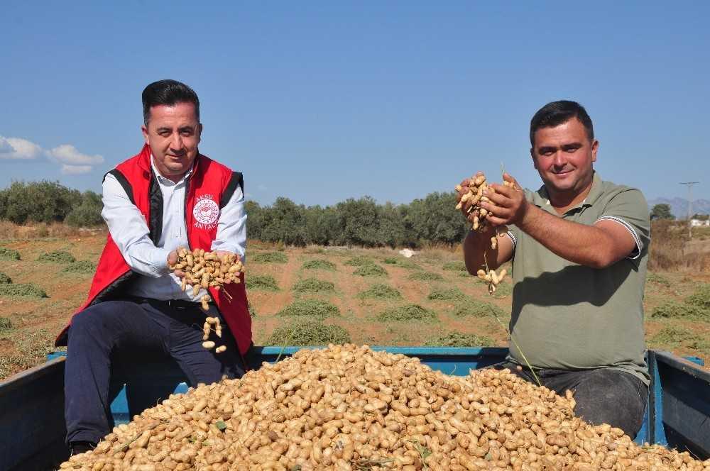 Antalya'da 'fıstık' gibi işe rağbet artıyor