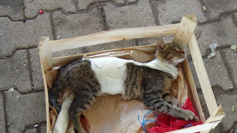 Ayağı ve gövdesi alçıya alınmış kedi, pazarcı tezgahında hayata tutundu