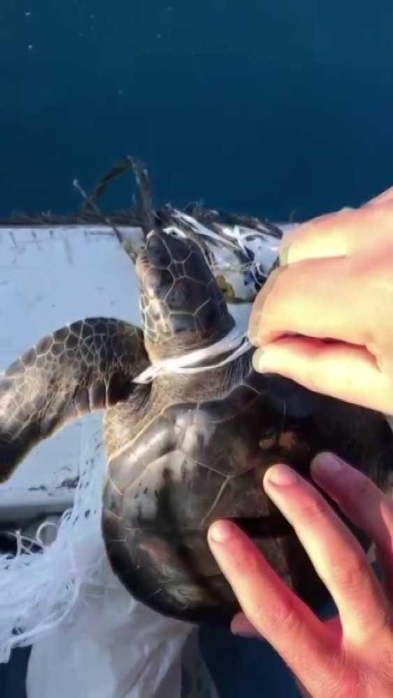 Denizdeki çöplere dolanan yeşil yavru deniz kablumbağasını balıkçılar kurtardı