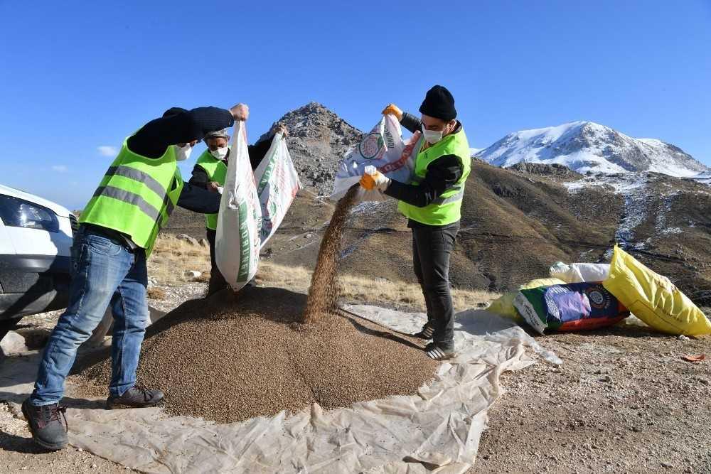 Konyaaltı'nda meralar tohumla zenginleştiriliyor