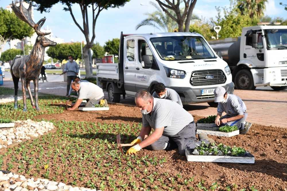 Konyaaltı, 155 bin mevsimlik bitkiyle süslendi