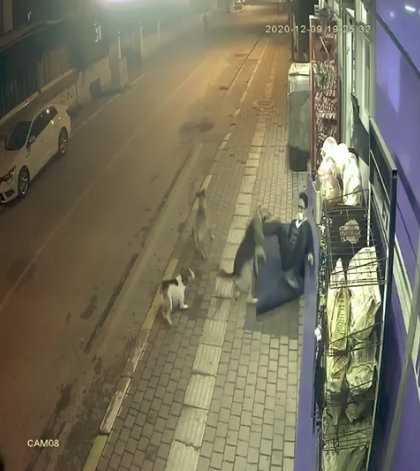 Sokak köpeklerinin saldırısını tekmeyle püskürttü
