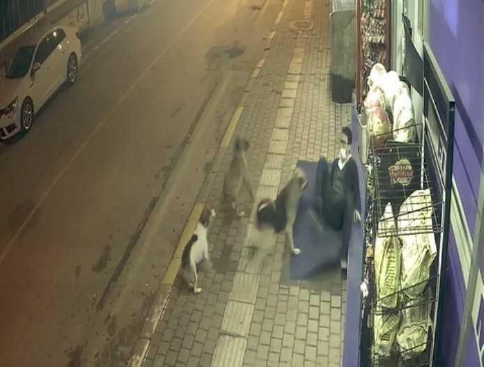 Sokak köpeklerinin saldırısıyla yere düştü, saldırıyı tekmeleriyle savuşturdu