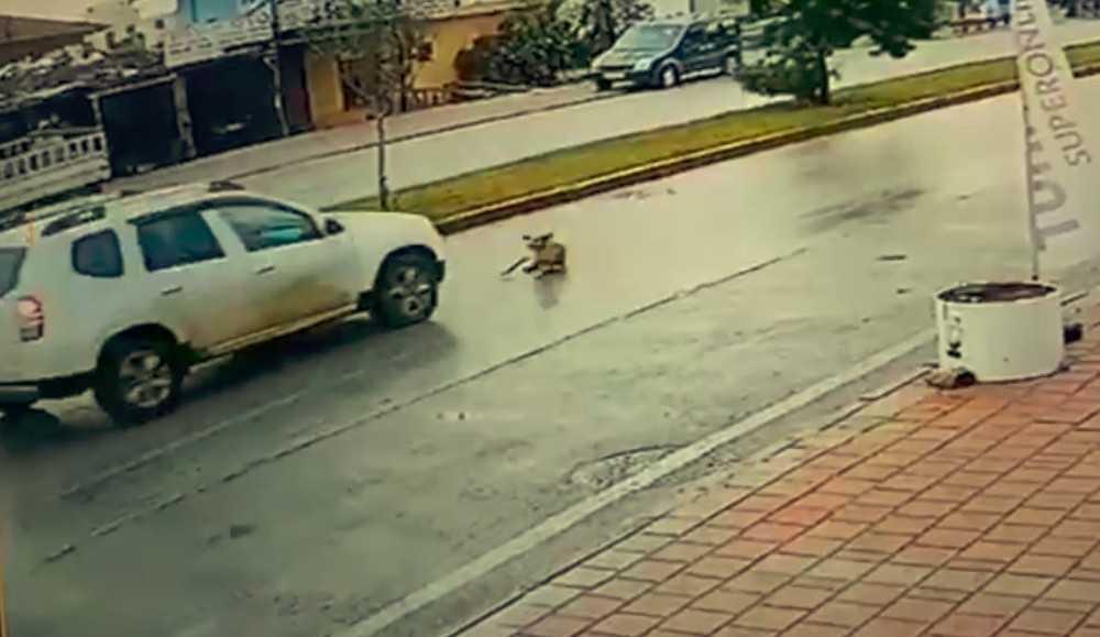 Vicdansız sürücü köpeğe çarpıp arkasına bile bakmadan kaçtı