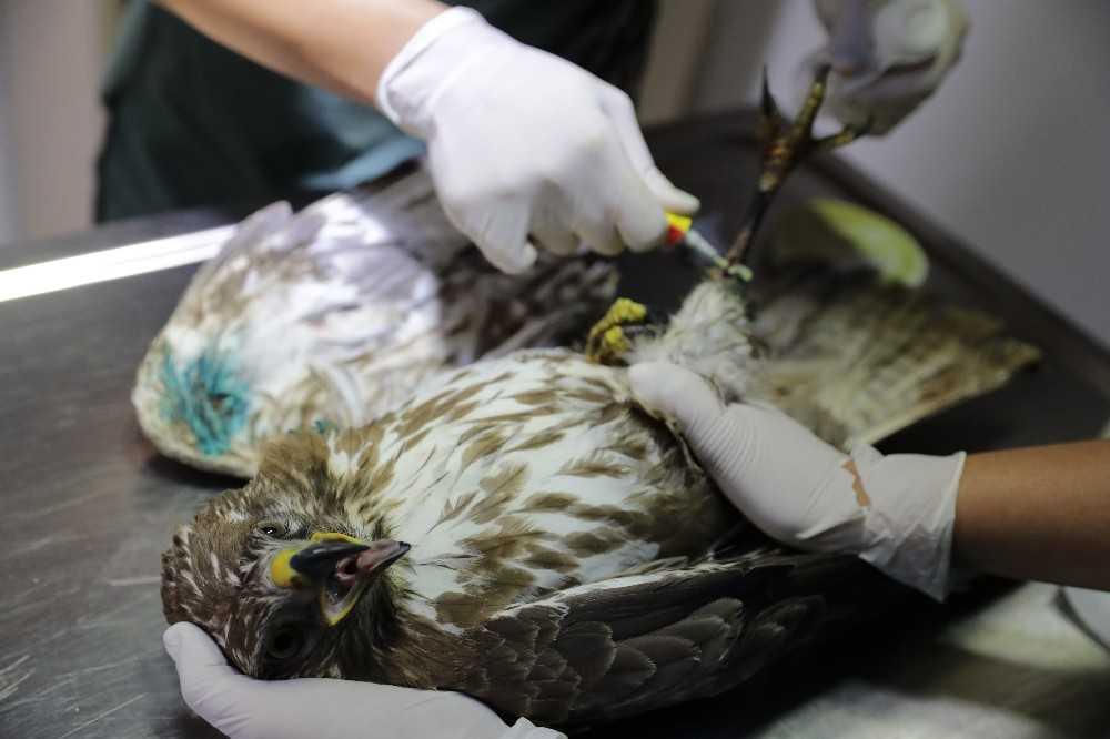 Yaralı yaban hayvanlarını tedavi edilip doğaya bırakiliyor