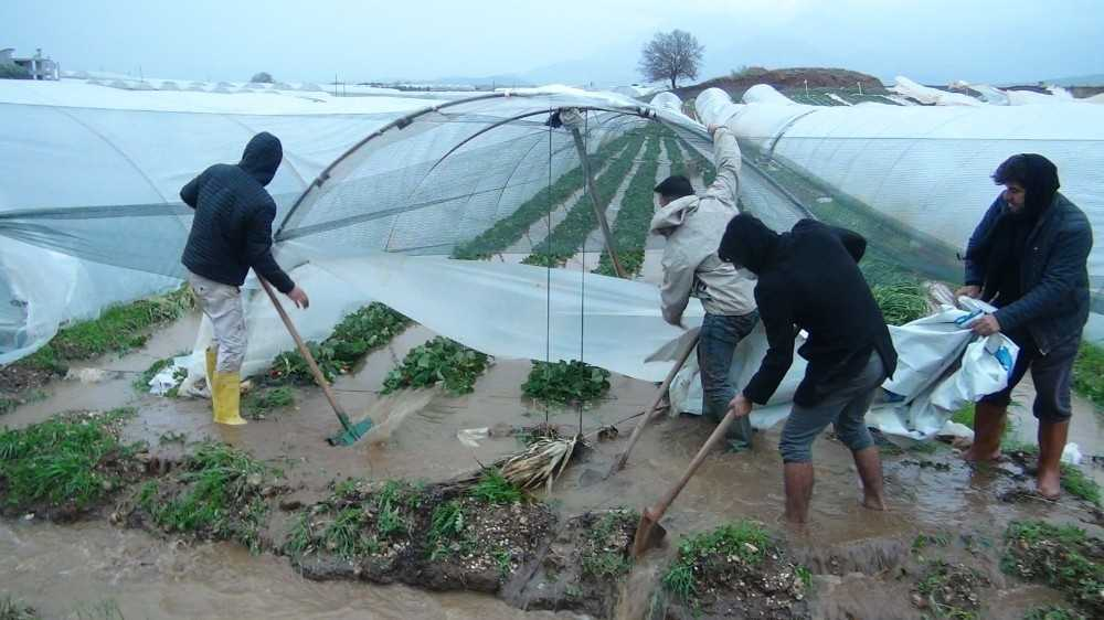 Antalya'da fırtına ve yağmur çilek seralarını vurdu