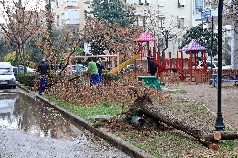 Antalya'da hortum ağaçları kökünden söktü, çatıları uçurdu