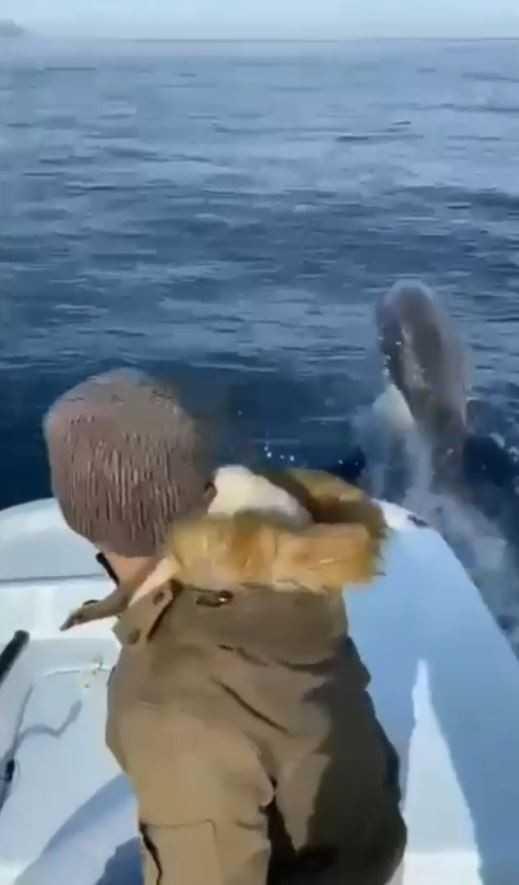 Antalya'da yunuslar tekneyle yarıştı, balıkçılar şaştı kaldı