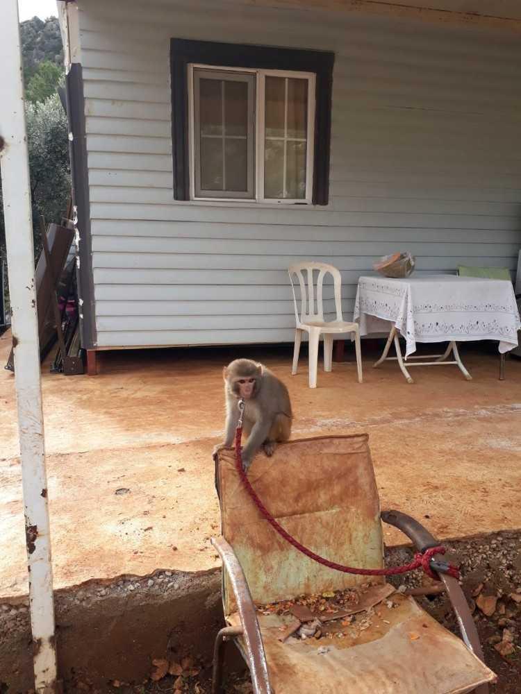 Evinde maymun ve keklik besleyen kişiye 2 bin 763 lira para cezası kesildi