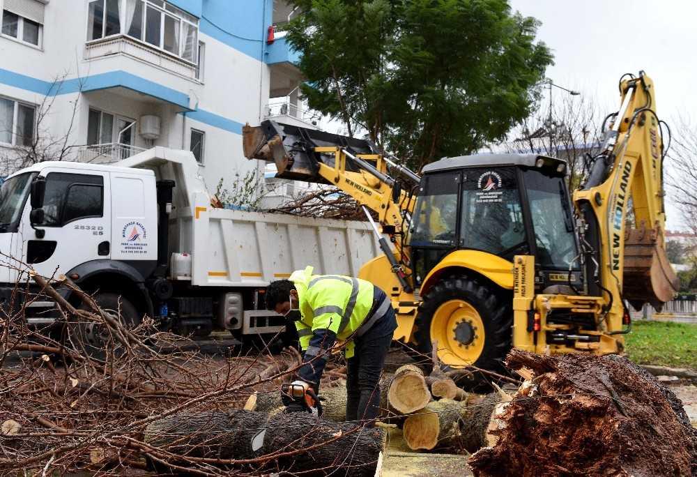 Fırtına sebebiyle devrilen dev  ağaç parçalanarak kaldırıldı