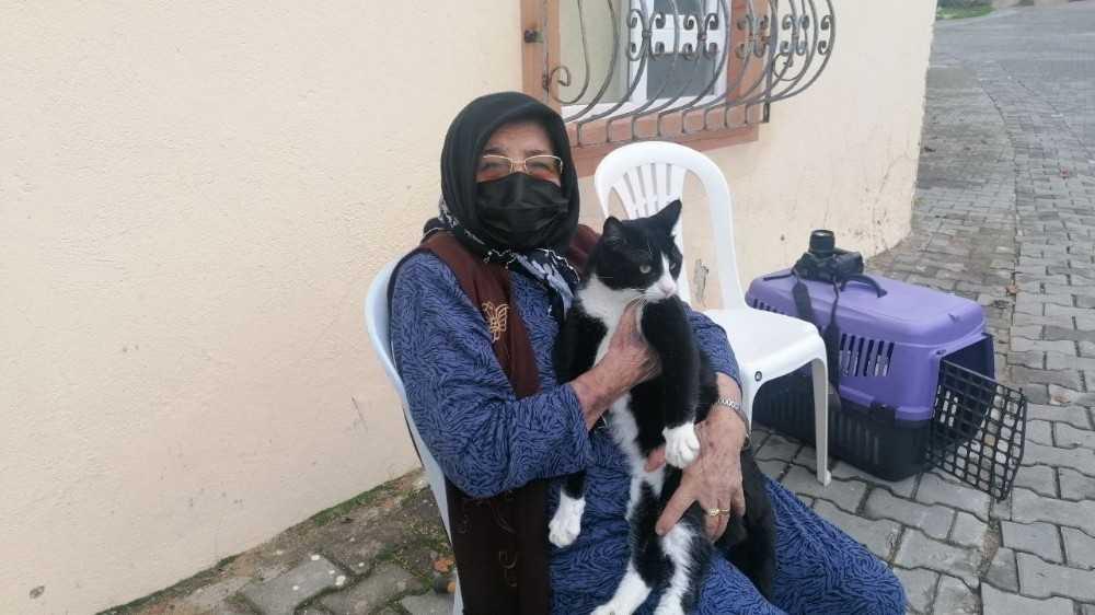 Kedisini severken sertliği hissetti, soluğu jandarmada aldı