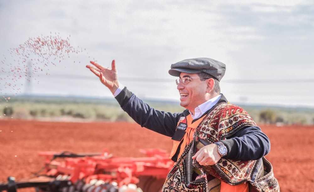 Kepez'de  ekilen 540 dönüm buğday filiz verdi