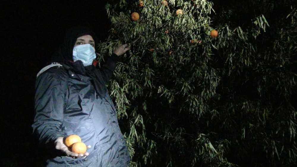 Kesilen narenciye ağaçları başında gözyaşı döken kadınlar, gece nöbetine başladı
