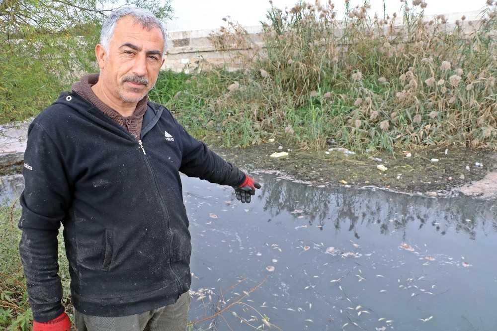 Köpüren ve kötü kokan derede binlerce balık telef oldu, martılar ölü balıklara üşüştü