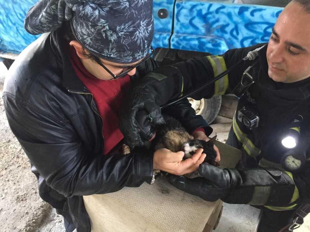 Yangında boğulmak üzere olan kedi oksijenle hayata döndü