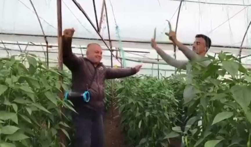 Yeşil biber fiyatındaki artış üreticiye çiftetelli oynattı